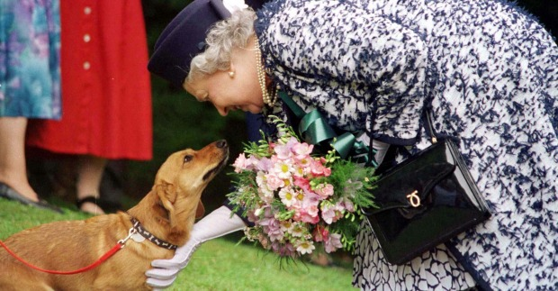 Königlich auf vier Pfoten: Die Hunde der Queen