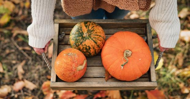 Soulfood für den Herbst: Was Kürbis so wertvoll macht