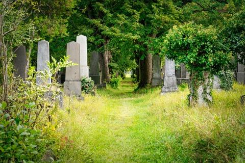 Pfad am Zentralfriedhof