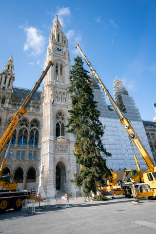 Aufstellung des Weihnachtsbaumes am Rathausplatz_1