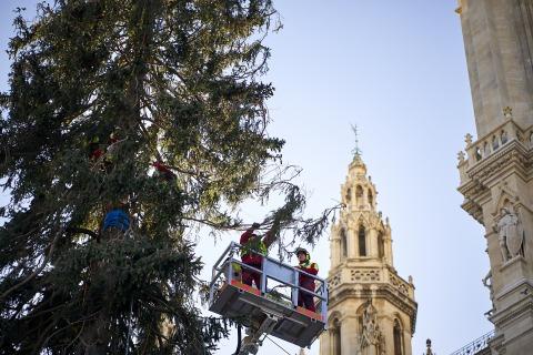 Der Wiener Weihnachtsbaum wird geschmückt_3