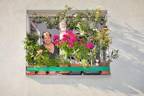 Blühendes Zuhause mit Blumenkisterl