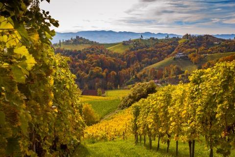 Eine Panoramaaufnahme eines steirischen Weinbaugebiets