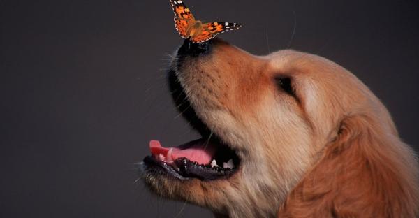 Wuff: 10 Dinge, die Sie über Hunde nicht wussten