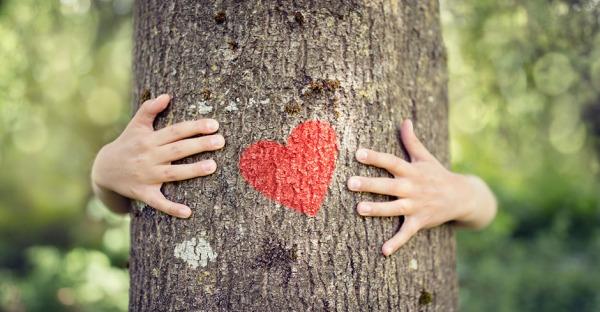 Top 5: Bäume der Superlative