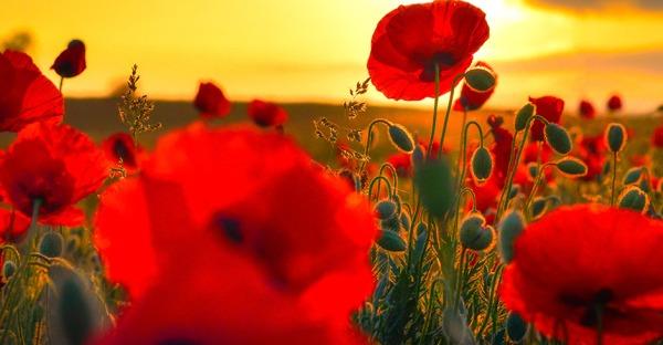 Blumen sagen mehr als 1.000 Worte: So geschwätzig sind Pflanzen