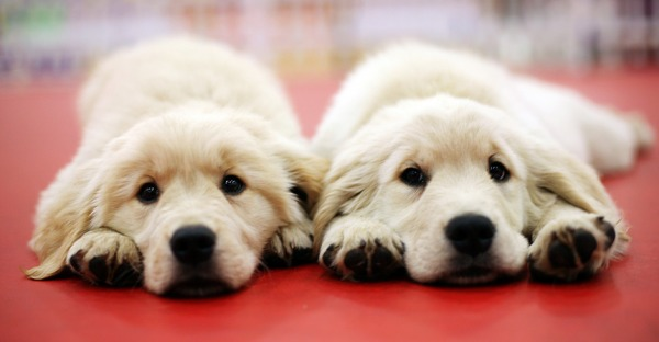 Doppelgänger: Kann man Hund und Katz klonen?
