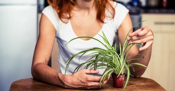 Grüner Daumen: Mit diesen 9 Tipps leben Ihre Zimmerpflanzen länger