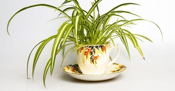 12 Pflanzen, die für ein besseres Raumklima sorgen