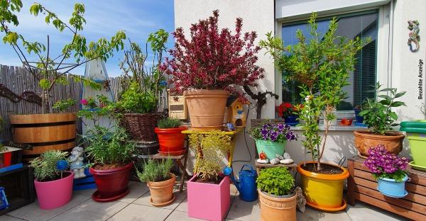5 Dinge, die Sie bei Ihren Pflanzen beachten müssen