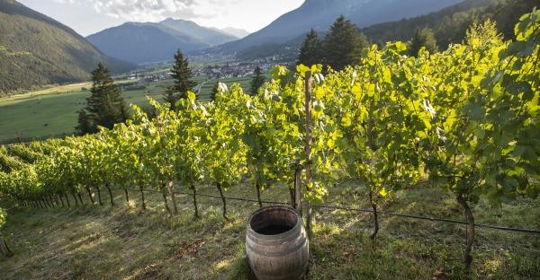 Weingenuss: Edle Tropfen aus Tirol