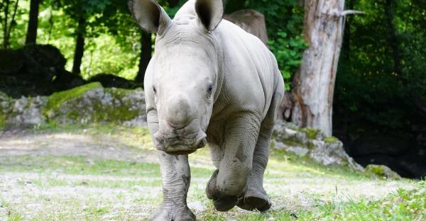 Tierisch süß: Salzburgs neue Zoo-Bewohner