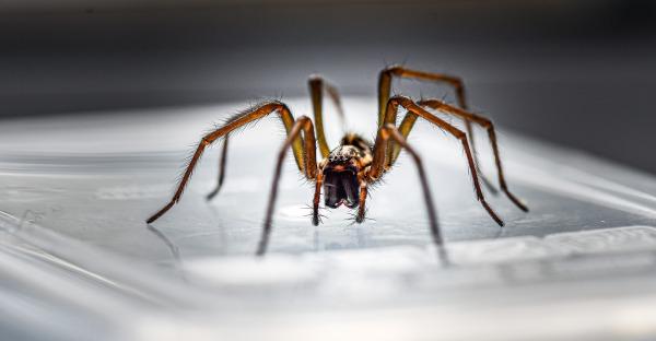 Hilfe, die Spinnen kommen!