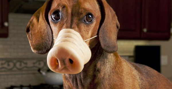 Neujahr: Wie man den inneren Schweinehund überlistet