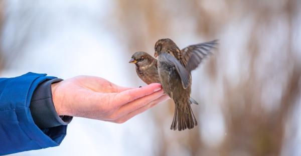 Häufigste Wintervögel: Wien lässt Federn