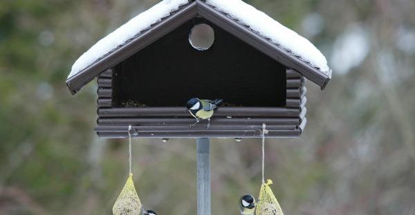 Wie soll man Vögel füttern?