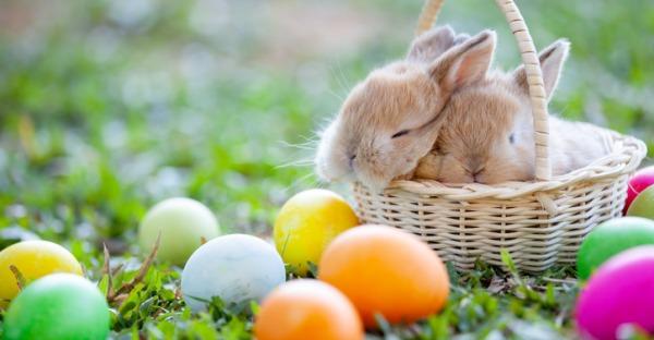 Ein echter Hase als Ostergeschenk? Lieber nicht!