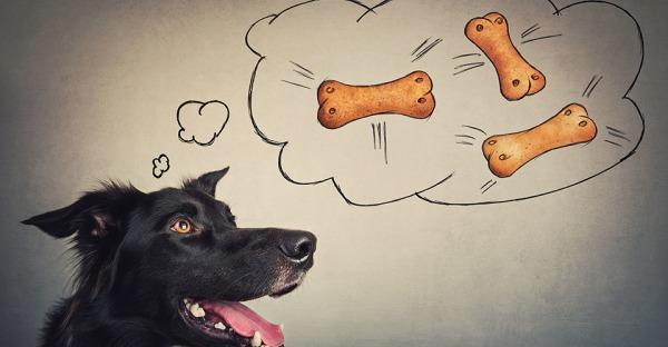 Hundekekse selber backen: Die 6 besten Rezepte für Anfänger