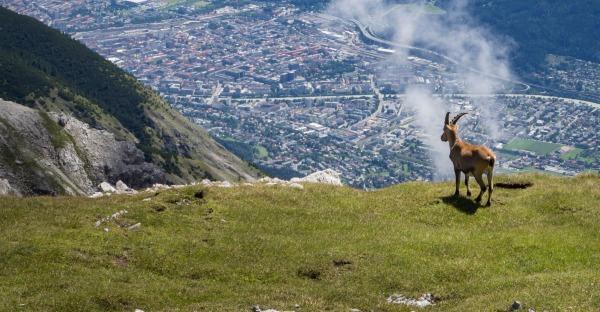 Einreichungen für das 20. Innsbruck Nature Film Festival starten