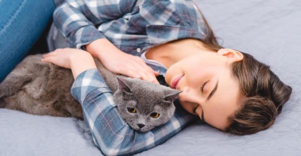 Gründe, die für eine Britisch Kurzhaar Katze sprechen