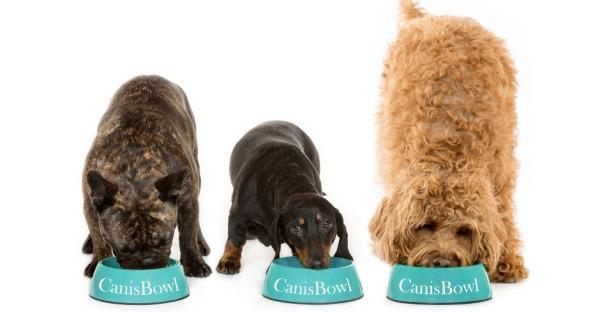 CanisBowl: BIO-Hundefutter aus Österreich