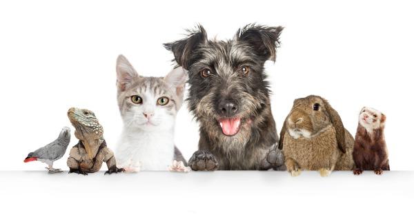Die Haustiere der steirischen Promis