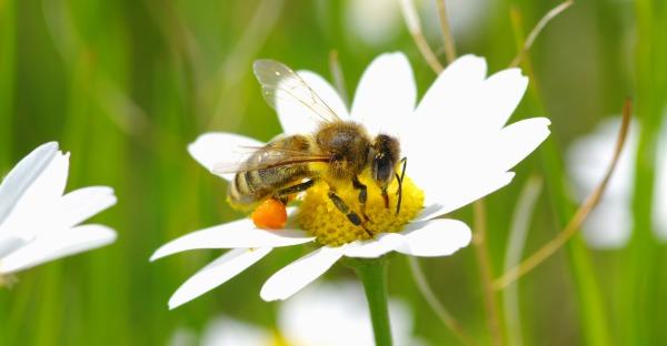 Insektenstiche: das kann man tun