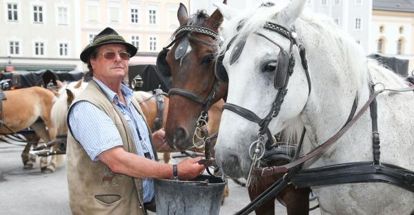 Sollen Pferdekutschen für Touristen abgeschafft werden?