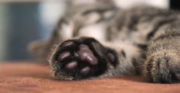 Wie Katzen dank ihrer Pfoten die Welt erkunden