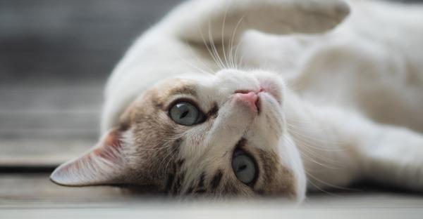 Schnurrhaare - der sechste Sinn der Katze