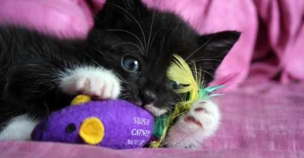 Wie wichtig Spiele für Katzen sind