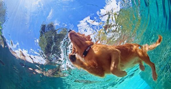 Hier kann man mit seinem Hund schwimmen gehen