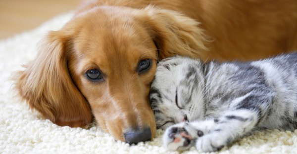 Hund und Katz - geht das zusammen?