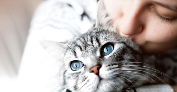 Die wichtigsten Tipps zur Katzenpflege