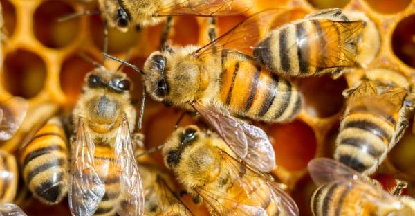 Immo anders: Buwog baut auf Bienen