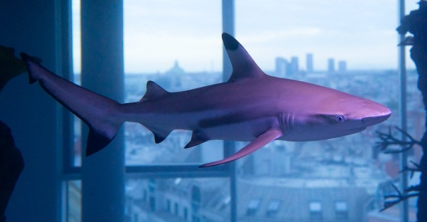 Haie im Lift: Umzug ins neue Aquarium