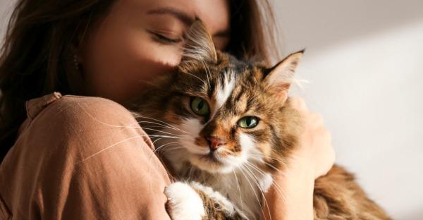 Kann meine Katze mich verstehen?