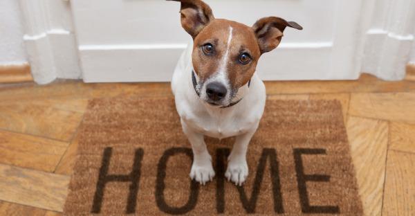Gefunden: 295 Hunde und Katzen wieder zuhause